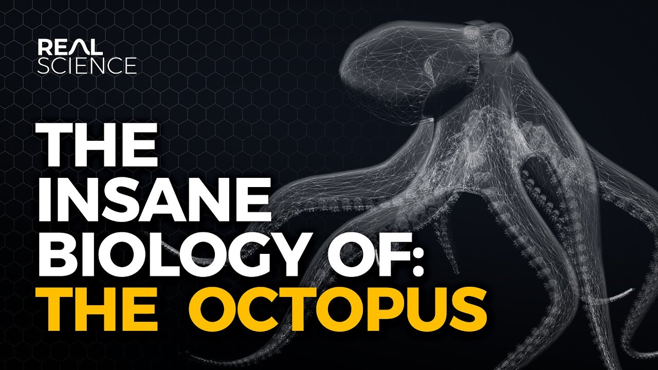 Download The Insane Biology of: The Octopus