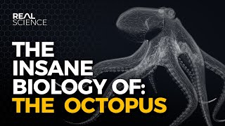 The Insane Biology of: The Octopus