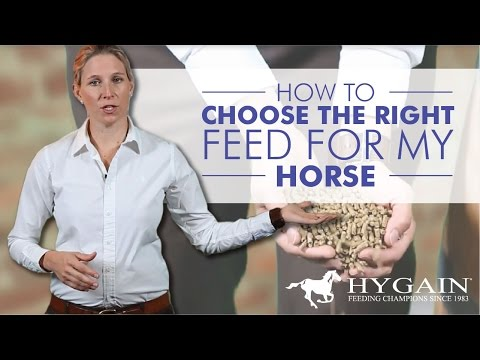 How To Choose The Right Feed For My Horse