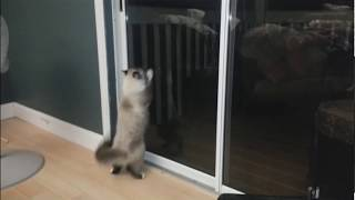 Roblox Death Sound plays over cat trying to escape