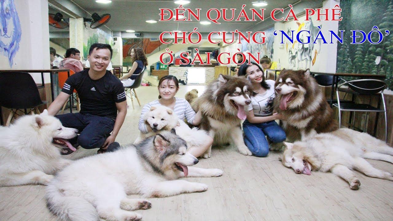 Quán cà phê chó cưng ngàn đô sang chảnh nhất Sài Gòn