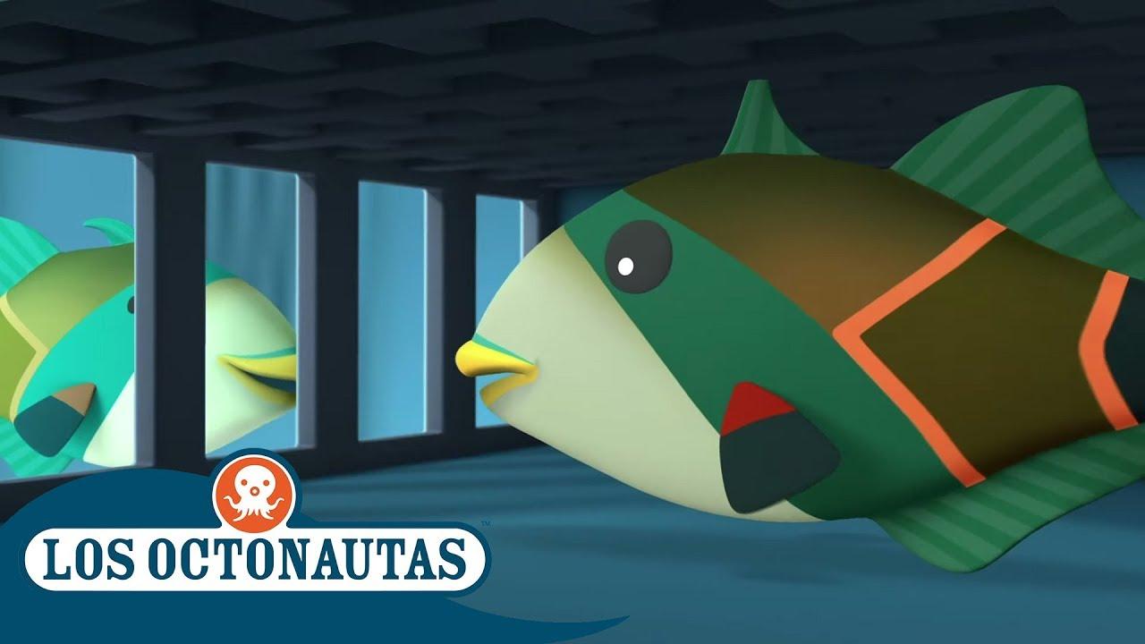 Los Octonautas Oficial en Español - El Pez Con El Nombre Difícil | Compilación