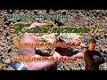 Тайны пустыни - 1: Занимательная палеонтология и археология
