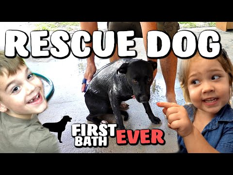 Her First Dog Park Adventure from YouTube · Duration:  9 minutes 15 seconds