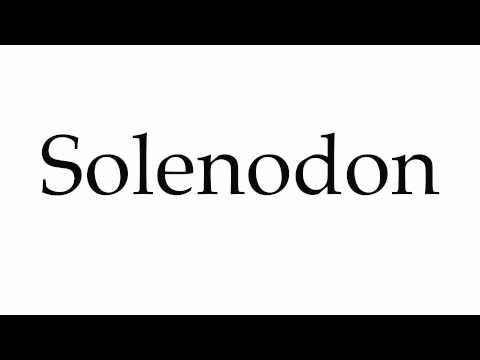 How to Pronounce Solenodon