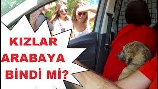 Otostop Çeken Kızlar Arabada Tozlu Topraklı Köpeği Görünce Ne Yaptı?