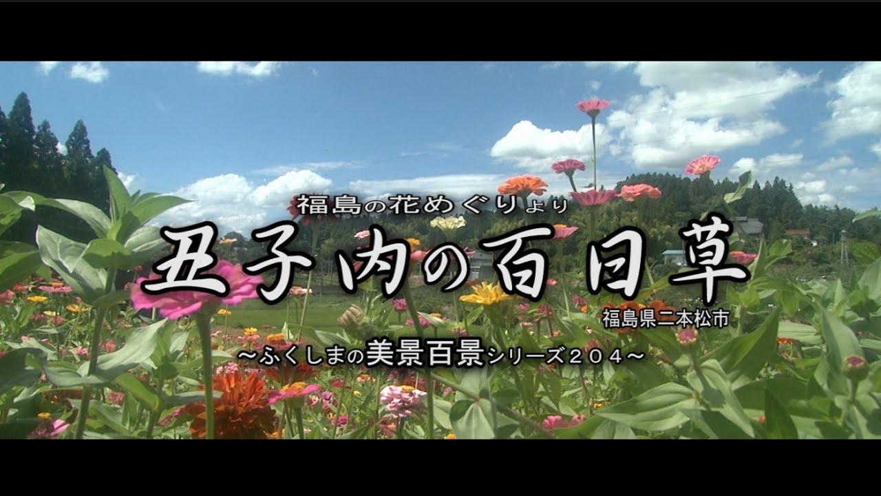 福島の花めぐりより ~二本松市丑子內 百日草~ - YouTube