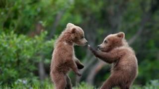 #Бурі ведмеді#ведмедики виходять і на рибалку