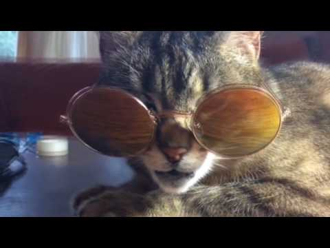 Singing cat wearing glasses