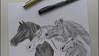 Dibujando Caballos | Drawing Horses with Liner Pens