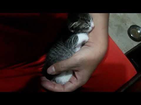 kitten sleeping in my arms after bottle feeding