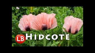 Europe Gardens | HIDCOTE Garden | Chipping Campden Cotswold Gloucestershire | Travelogue