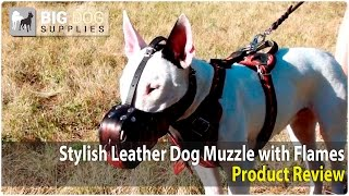 Bull Terrier And Other Dogs Wearing Flamed Dog Muzzle