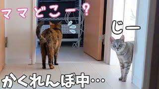 サビ猫とかくれんぼしたらまさかの方法で見つかりました…