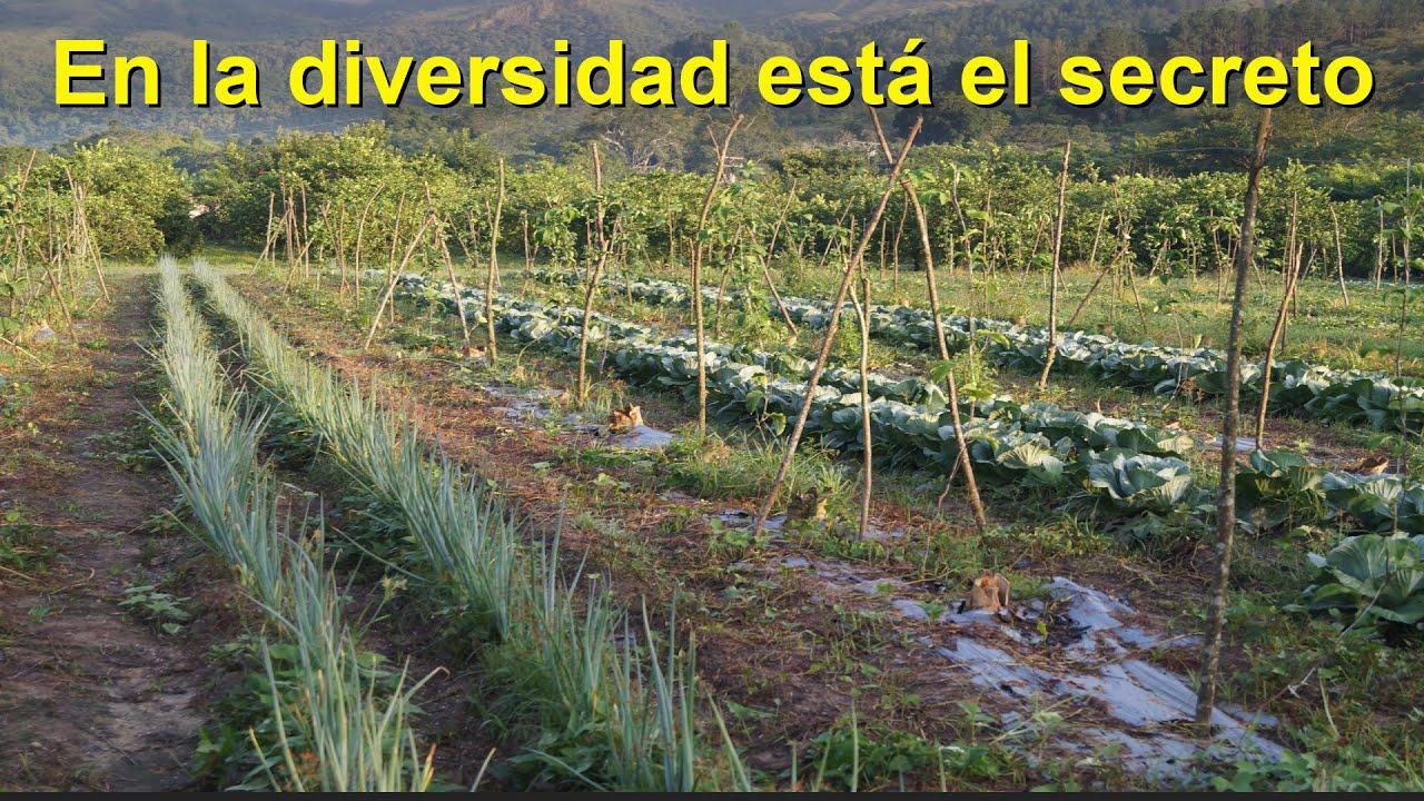 La agricultura orgánica NO es agroecológica