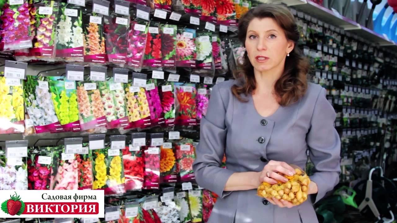 Предлагаем купить лук севок оптом и в розницу в интернет магазине bbcom. Ru. Лучшая цена на семена лук севок в москве.