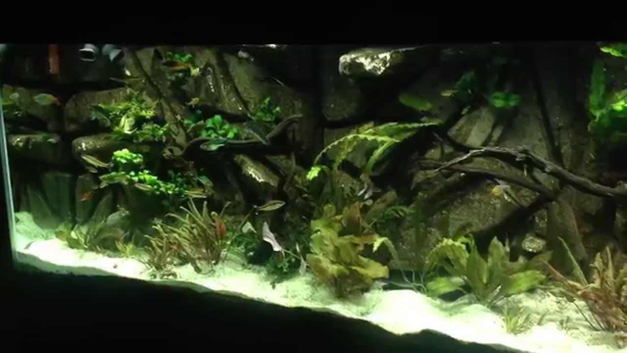 135 gallon planted aquarium - 3d background
