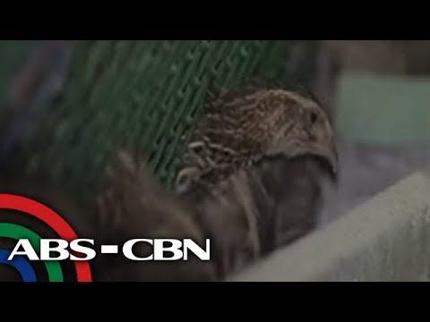 TV Patrol: Bird flu sa Nueva Ecija, kumpirmado; quarantine ipinatupad