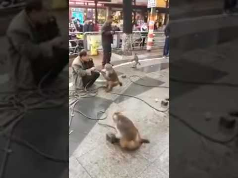 crazy monkey    ultimate thug life compilation #44crazy monkey special