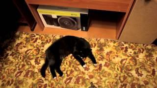 Кот ложится спать