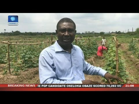 Sustainable Farming Practice In Nigeria  | Eco@Africa |