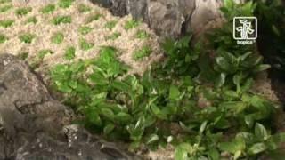 Das anspruchsvolle Pflanzenaquarium