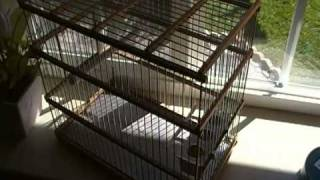 Custom Made Songbird Wood Cages
