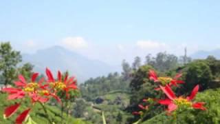 Munnar Tata Tea Plantage - Biggest of the World - India