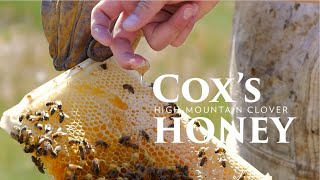 Cox's mountain clover honey