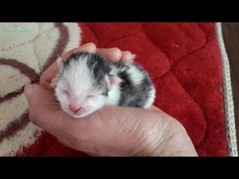 mèo con, mèo mẹ tha con/ baby cat/ cute cat/ minh tra