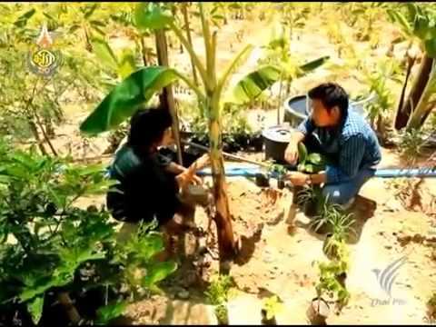 อยากปลูกผัก ปลูกต้นไม้ แต่ไม่รู้จะปลูกยังไงมาเริ่มต้นไปกับเรา