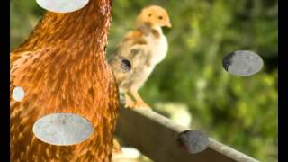 Cheap Small Chicken Coop Plans | How To Build Small Chicken Coop Plans & Designs | Quick & Easy