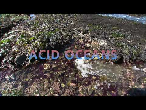 Science Bulletins: Acid Oceans