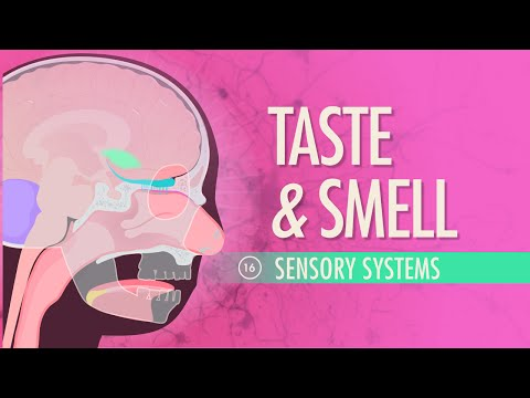 Taste & Smell: Crash Course A&P #16