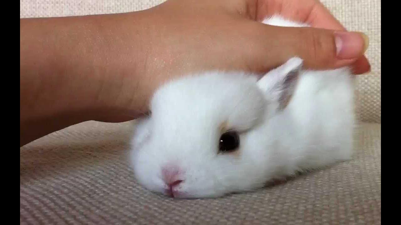 三隻兔子也太太太太可愛了吧! ! !親了旁邊的兔兔一口趕緊害羞的縮了回去,順便打轉! ! ! !