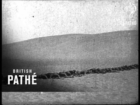 Australians In Egypt (1914-1918)