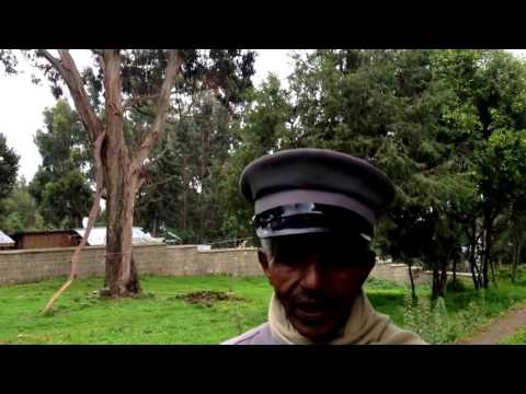 First eucalyptus tree brought to Ethiopia by Emperor Menelik