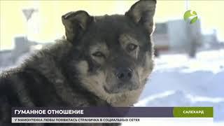 В общественной палате Ямала обсудили проблемы обращения с домашними животными