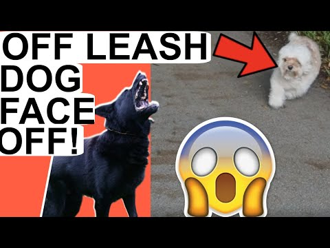 What should I do if approached by dog- Aggressive German Shepherd gets attacked by small dog on walk