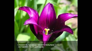Самые дорогие цветы мира