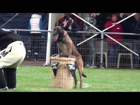 Coupe du Monde de Chiens de travail en MondioRing à Grande Synthe 2012, clip 01