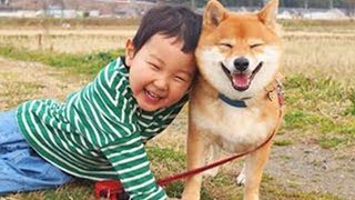 Dogs And Babies Are Best Friends 🥰 Cute Shiba Dog and Baby Playing Together