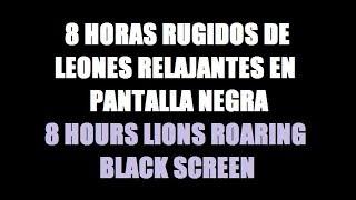 8 horas rugidos de leones música para dormir relajante pantalla negra / 8 lions roaring black screen