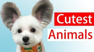 Cute Animals Videos Compilation | Cute Moment Of The Animals - Cutest Animals