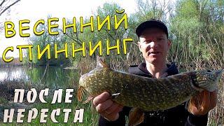 Рыбалка на щуку весной после нереста Щука на спиннинг Техника ловли