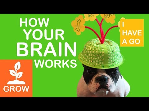 How Your Brain Works For Kids | Growth Mindset And Neuroscience For Kids | I HAVE A GO