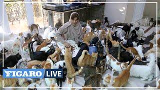 🐱Maryam vit avec 480 CHATS et 12 chiens: «Ils ont été ma bouée de sauvetage»