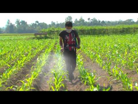 Benefit of FLORA as yield booster
