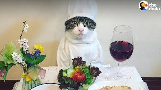 Cat Poses With Dinner Every Single Night | The Dodo