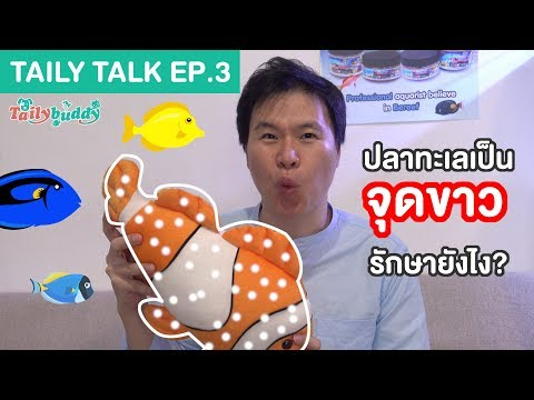 taily-talk-ep.3-|-marine-fish-ich/white-spot,-what-is-it-and-how-to-cure